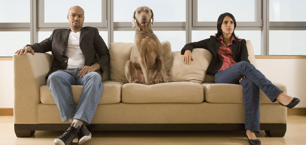 Dogs & Divorce: Is it a bone of contention?