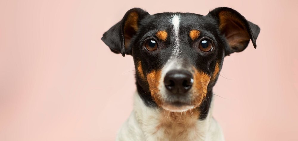 Dogs & Divorce- a bone of contention?